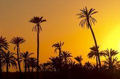 El palmeral de Elche Most Beautiful, Beautiful Places, Alicante Spain, Celestial, Phoenix, Sunset, Plants, Outdoor, Blog
