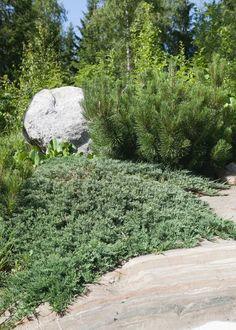 Outdoor Decor, Autumn Garden, Plants, Garden, Outdoor, Stepping Stones, Garden Decor, Landscape, Sidewalk
