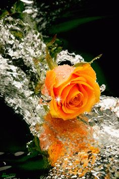 The perfect ILY ILoveYou Rose Animated GIF for your conversation. Discover and Share the best GIFs on Tenor. Roses Gif, Flowers Gif, Beautiful Rose Flowers, Pretty Roses, Beautiful Gif, Love Rose, Beautiful Flowers, Beautiful Pictures, Beautiful Scenery