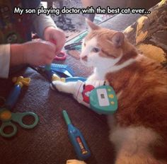 This is like  my cat, Herbert.  He was the most patient feline in the world!