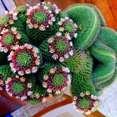 Cactus of the day