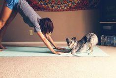 20 heyvan bizə Yoga ilə məşğul olmağı öyrədəcək