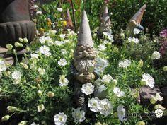 Een foto uit de tuin van Peterbo #tuinkabouter