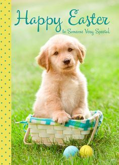 Custom Pet Easter Cards Personalized Easter Cards Easter card of 3 or more pets Custom Pet Portrait funny pet portrait