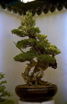 bonsai garden | Bonsai I,Suzhou-style Bonsai Garden,Singapore. | Flickr - Photo ...