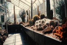 I want a cactus.
