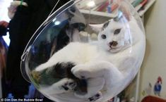 The £30 'bubble bowl' chair for CATS | Daily Mail Online