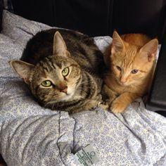 Athena and Leo