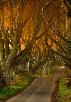 The Dark Hedges, Antrim, Northern Ireland  photo via pinspire