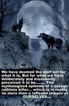 I LOVE My ~Wolves~ !!!! They are Misunderstood by Many which I find Very Disturbing.... Long Live This Beautiful Majestic Soul . <3