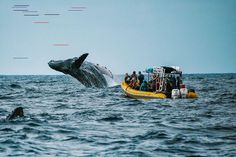 Whale Watching Maui Tours: Voted on Trip Advisor - Close Encounters! Trip To Maui, Maui Vacation, Whale Watching Maui, Maui Tours, Underwater Animals, What Dreams May Come, Close Encounters, Wal, Okinawa Japan