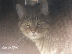 Tabby T.A. Whitford peering through the screen.
