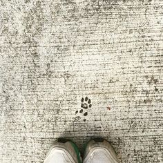 Following someone's little paw prints. Have a great Saturday everyone. I really love all things about cats. #cats_of_instagram #purrfectpetgifts #cathats #hatsforcats #madhatter #etsyshop #etsyorder #etsyseller #etsyworld #etsyusa #etsyfinds #etsymadelocal #etsypromo #etsyprepromo #etsysellersofinstagram #etsygifts #etsystyle #etsyhunter #sgcrafters  #handmadesg #handmade #catsofinstagram #singaporecat #singaporecats #catagram #cat_of_instagram #ilovemycat #fatcat #lovecats  #catgram…