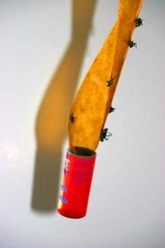 les rubans anti mouche sont efficaces pour éliminer les mouches