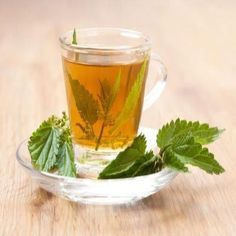 """Nettle Tea Benefits"" Infusing a large amount of dried stinging nettle leaves in water for a long period of time is one of the easiest and most traditional ways to obtain nettle tea benefits. From MOTHER EARTH NEWS"