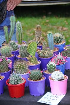 Decoração – Jardim de Cactos | ♥♥ Coruja Míope ♥♥