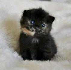 kitten....https://ift.tt/2JtVutj
