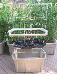 """""""EarthTainer"""" Self-Watering Design: """"The InnTainer which is based on an 18 gallon tote incorporates a self-contained 3 gallon water reservoir. Users can now go for weeks between watering intervals, for unattended operation. Veg Garden, Tomato Garden, Lawn And Garden, Garden Tomatoes, Garden Cottage, Indoor Garden, Self Watering Containers, Self Watering Planter, Storage Containers"""