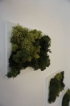 Have your own nature at home! Bring nature home with this amazing Iceland moss picture. It does not just make you more relaxed, but the best green decoration for your home or office. Do not hold back yourself if you want to pet it, it feels awesome! How To Dry Basil, Awesome, Amazing, Herbs, Make It Yourself, Green, Nature, Pictures, Decor