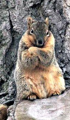 Go ahead, repin me...I dare you. (**Feelin' Squirrely** group board 12-11-15)