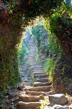 Stone steps go through a natural Arbor on a trail in Cinque Terre, Italy