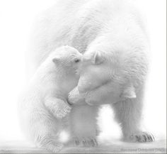 """Miks' Pics """"Animals ll"""" board @ http://www.pinterest.com/msmgish/animals-ll/"""