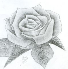 Easy pencil drawings of flowers pencil sketch of rose flower at explore flower drawings in pencil . Pencil Drawing Images, Pencil Sketches Easy, Pencil Drawings Of Flowers, Pencil Drawing Tutorials, Rose Sketch, Black And White Sketches, Graffiti Lettering, Pictures To Draw, Drawing People