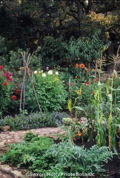 Kitchen garden with cobblestone paths, So. California.  Design: Gary Fredericks