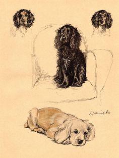 1934 Vintage Dog Print Spaniels Cecil Aldin