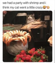 """21 Cute Cat Memes That'll Leave You Warm & Fuzzy - Funny memes that """"GET IT"""" and want you to too. Get the latest funniest memes and keep up what is going on in the meme-o-sphere. Funny Animal Images, Animals Images, Cute Funny Animals, Animal Memes, Funny Cute, Cute Cats, Animal Quotes, Cat Quotes, Top Funny"""