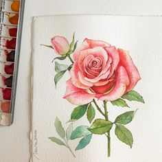 Watercolor Pencil Art, Watercolor And Ink, Watercolor Flowers, Gouache Painting, Watercolor Paintings, Watercolours, Colored Pencil Artwork, Girly Drawings, Rose Art