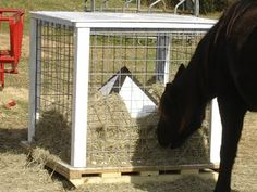 Picayune Poltroons: The Saga of the Miraculous, Amazing, Ingenious Four-horse Hay Feeder.