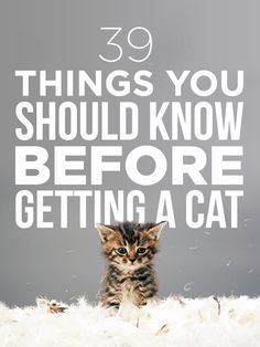 39 Things You Should Know Before Getting A Cat. I know most of these, but can't hurt to glance over!