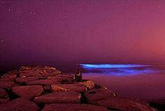 Overnight, Sydney's Manly Beach had a visit from some bioluminescent algae. Bioluminescent Algae, La Jolla Shores, Sydney Beaches, Manly Beach, Surf News, Underwater Photographer, Mission Beach, Surfer Magazine, Beach Rocks
