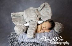 Newborn Photography, Newborn, Newborn Pose, Newborn with Stuffed Elephant, Dana Lee Photography