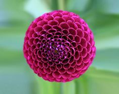 """These wonderfully symmetrical plants show the fractal nature of math, physics and the universe. Could this be evidence of sacred geometry? """"Look deep into nature, and then you will.View More → Fractals In Nature, Spirals In Nature, Geometric Patterns, Geometric Shapes, Color Patterns, Flower Patterns, Motifs Organiques, Natural Form Art, Theme Nature"""