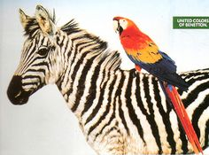 Exotic & Wild | Pattern at its Best! | United Colors of Benetton Ad  | { Pattern & Print Bazaar - Series 10: 12/20