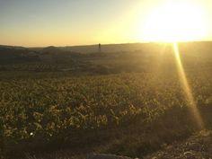 Vinyes Montferri  #vinyes a #montferri #altcamp #landscape #paisatge #nature #natura #vineyard #sol #sun #llum #light #orange #taronja #tarragona #catalunya #catalonia #photo #weekend #tardor #autumn