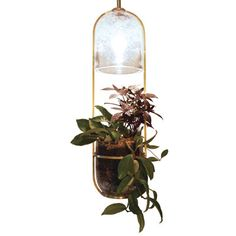 Growlight by my idols - Siemon    I want this. so. much.