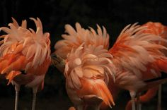 "A group of flamingos is called a ""flamboyance."" 27 Animal Facts That Will Brighten Your Day Fun Facts About Animals, Animal Facts, Animal Fun, Happy Animals, Cute Animals, National Geographic, Ruffled Feathers, Photo Stock Images, Kinds Of Birds"