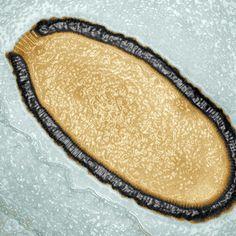 Un virus revive después de 30.000 años congelado en Siberia