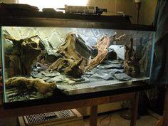 Feeding Your Bearded Dragon In The Right Way Reptile Habitat, Reptile Room, Reptile Cage, Reptile Enclosure, Bearded Dragon Habitat, Bearded Dragon Cage, Paludarium, Vivarium, Leopard Gecko Terrarium