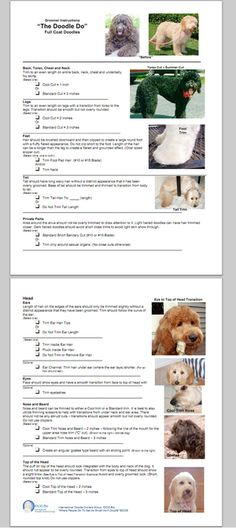 """The Doodle Do"" – Instructions for Groomers"