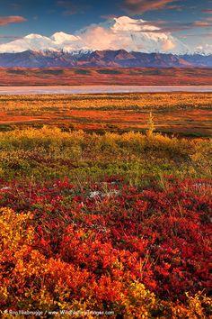 Denali National Park in Autumn - Alaska