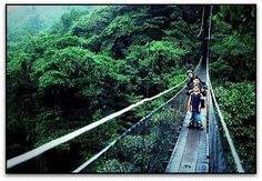 Skywalk, Monteverde, Costa Rica. What a truly incredible experience