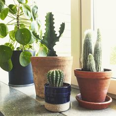 """E R I K J E S P E R S E N (@erikjespersen) på Instagram: """"Ordningen återställd rent fuktmässigt"""" flowers blommor kaktus"""