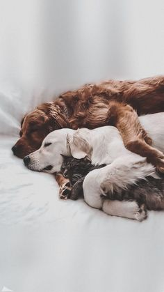 Source by jolinekochhafen dog dog memes dog videos videos wallpaper dog memes dog quotes dogs dogs pictures dogs videos puppies puppy video Cute Baby Dogs, Cute Dogs And Puppies, Doggies, Funny Puppies, Funny Dogs, Cute Little Animals, Cute Funny Animals, Cute Dog Wallpaper, Tier Fotos