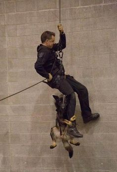 'Can I Live?' Police Dog Hilariously Hangs On To Human Partner During Training Exercise