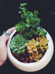 Succulent :)