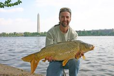 April 2004, Tidal Basin, Washington D.C. Have had some very memorable sessions and met some very good friends here... There is some great Carp angling sport to be had both here in the basin and in the Potomac river, wish I lived a little closer....  #CyprinusCarpio #CommonCarp #CarpFishingInAmerica #HowToCatchCarp #AmericanCarpSociety #WayneBoon